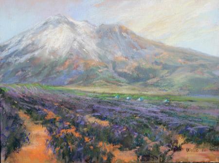 Lavender Dreams, by Willo Balfrey