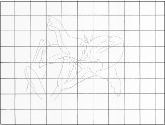 Paint and draw with crayons and lee hamond use this graphed line drawing as a guide to draw the flower lightly draw a 1 inch 25mm grid on your drawing paper in pencil fandeluxe Choice Image