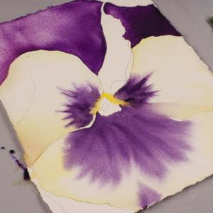 painting watercolor flowers step by step pansy power birgit o connor