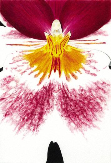 Colored pencil demo | Gary Greene, ArtistsNetwork.com