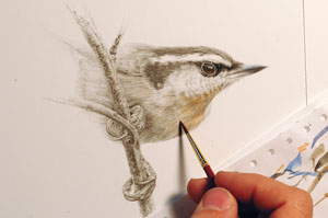 How to draw birds | David N. Kitler, ArtistsNetwork.com