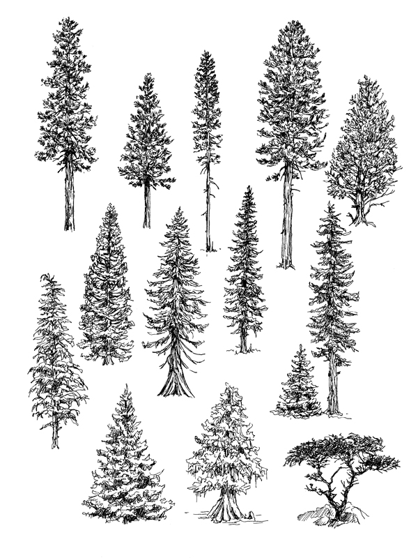 Drawings Of Trees Claudia Nice Artist S Network