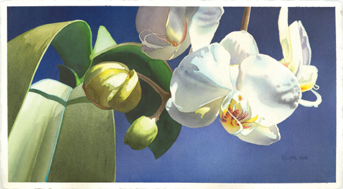 Flower by JudyLyon