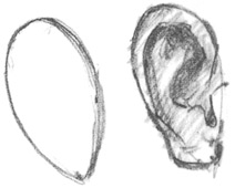 How to draw ears | Paul Leveille, ArtistsNetwork.com