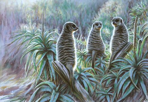 meercats painted in pastel | Steve Morvell