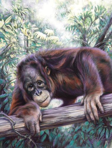 orangutan painted in pastel | Steve Morvell