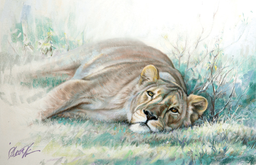 African lioness painted in pastel | Steve Morvell