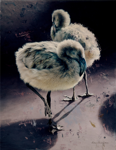 The Grey Scale flamingo chicks acrylic painting by Andrew Denman wildlife art
