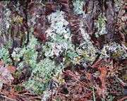 mixed media art, stained glass art, John Sollinger art