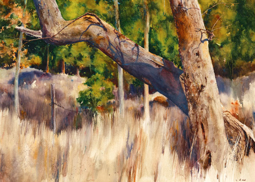 Light and Shadow With Trees by Lane Hall | watercolor landscape