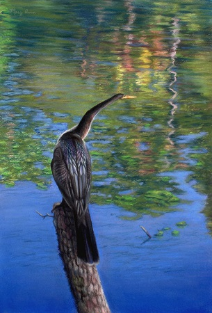 Anhinga (pastel and charcoal, 19x13) by Mary Ann Pals. This painting was featured on the cover of the 2009 IAPS convention catalog.