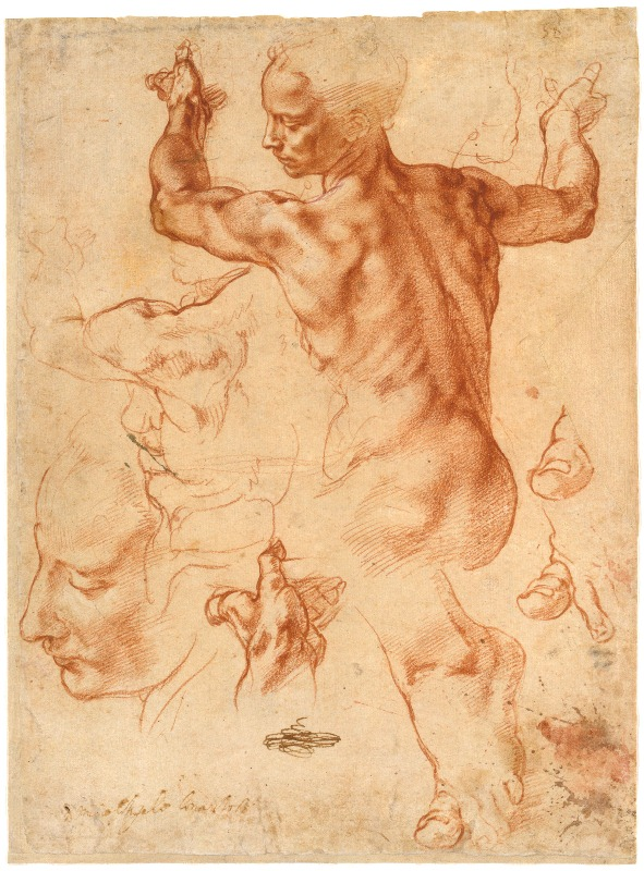 Studies for the Libyan Sybil, by Michelangelo, ca. 1510–1511, red chalk, with small accents of white chalk, 11 3/8 x 8 7/16. Collection The Metropolitan Museum of Art, New York, New York.