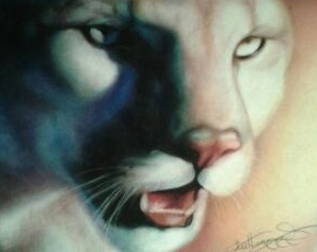 Panther drawing in colored pencil for the Friends of Florida Panther Organization