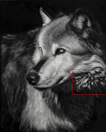 how to draw animal fur in scratchboard