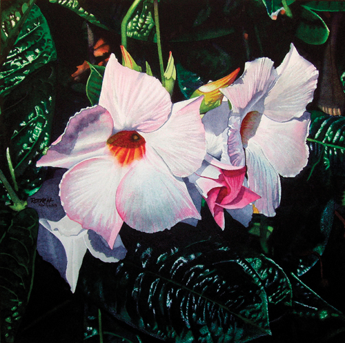 Mandevilla in the Morning (watercolor on paper, 13x13) by Marlin Rotach   watercolor flowers