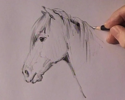 Get a realistic horse drawing with just a pencil