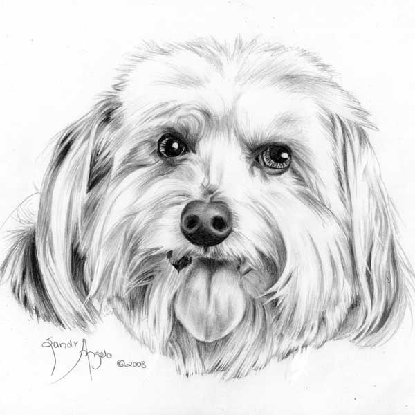 Shaggy-Dog-drawing-by-Sandra-Angelo
