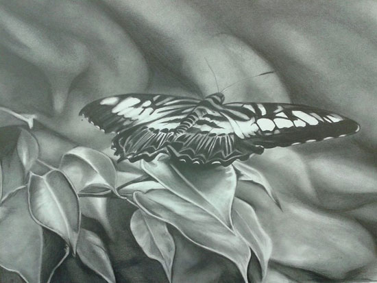 How to draw a butterfly in graphite