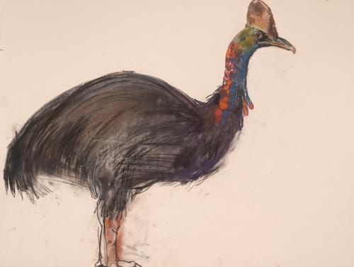 Cassowary (pastel, 29x21 1/2) by Lara Scouller
