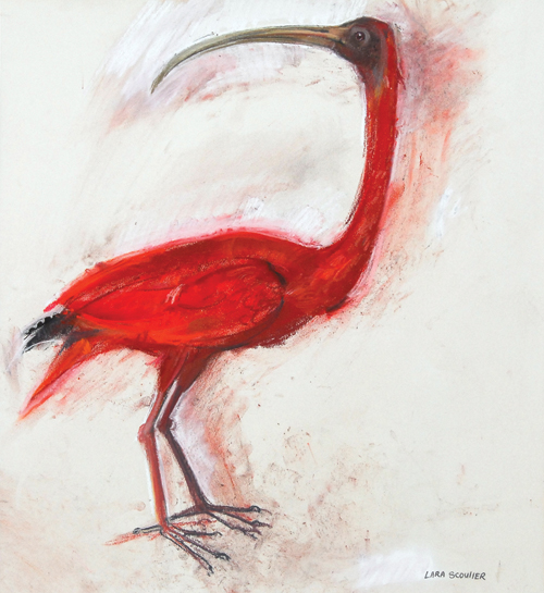 Red Ibis (pastel, 21x19) by Lara Scouller