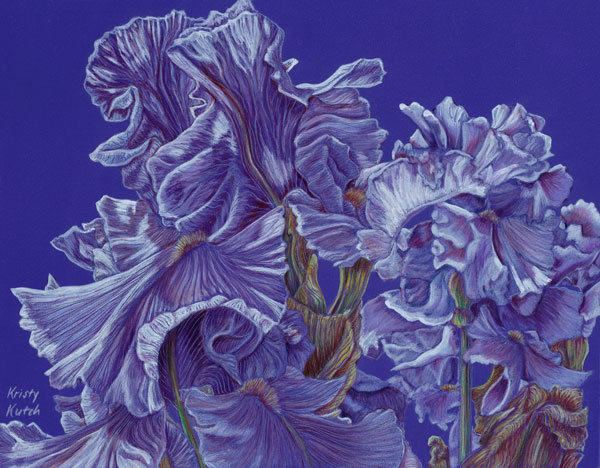 Iris Flurry, colored pencil art by Kristy Kutch