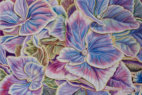 Variegated Hydrangea (colored pencil art) by Kristy Ann Kutch