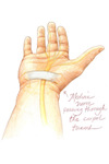 Colored pencil drawing by Leslie Arwin of the median nerve.