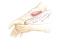 Wrist flexors with extension stretch--colored pencil drawing by Leslie Arwin