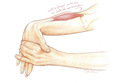 Wrist extensor with flexion stretch--colored pencil drawing by Leslie Arwin