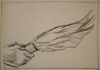 Sigmund Abeles' student drawing--Hand with Feathers