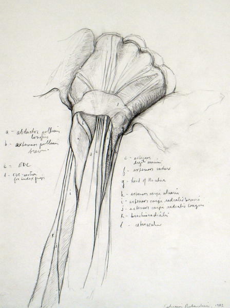Drawing Basics Understanding Anatomy Of The Arm Artists Network