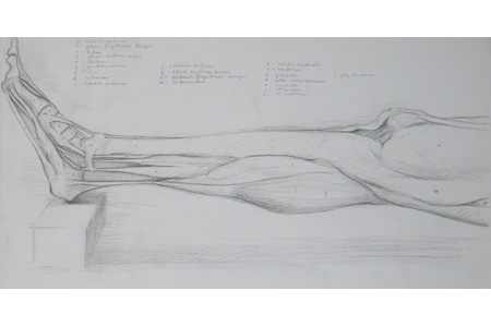 Drawing bodies 101: Dissection of a Leg II by Ephraim Rubenstein