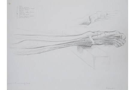 Drawing bodies: Dissection of the Leg I by Ephraim Rubenstein