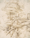 Trees by Agostino Carracci, ca. 1590, brown ink drawing
