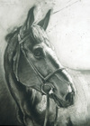 Amelia's Horse, Pali by Ephraim Rubenstein, graphite drawing