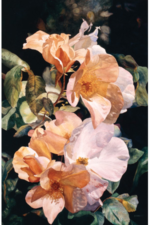 Touch of Velvet by Florence Strauss, 2006–2007, watercolor, 22 x 30.