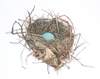 Bird's Nest by Deborah L. Friedman, drawing