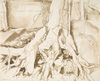 Drawing by Philip Pearlstein, Tree Roots, Clutching