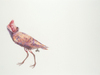 Colored pencil drawing by Julia Randall, Lovebird No. 2