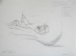 Drawing anatomy--the neck by Ephraim Rubenstein