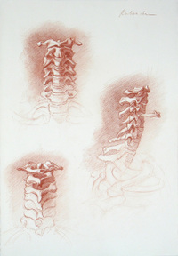 Ephraim Rubenstein's drawing of the neck vertebrae