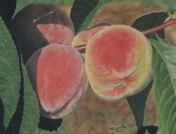 Dee Overly Peaches Colored Pencil Drawing