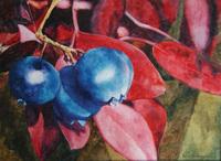 Bradburn Blue Ridge Blueberries watercolor