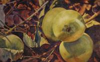 Bradburn Fallen Branch watercolor