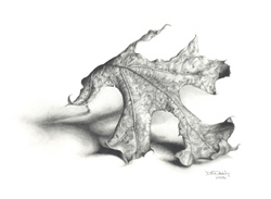 Dee Overly Leaf Study graphite pencil drawing