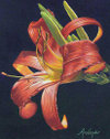 Colored pencil drawing by Arlene Steinberg, Beauty for a Day