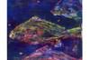 Ayres Three Fish Printmaking
