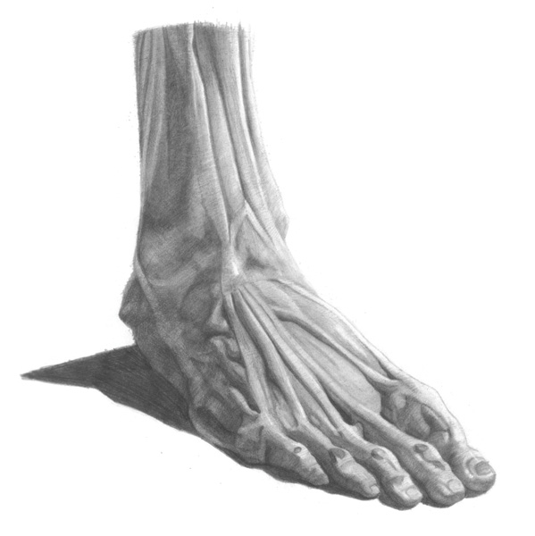 Drawing Basics: Understanding Anatomy by Drawing the Foot - Artists ...
