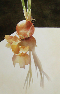 Robison Sprouted Onion watercolor