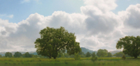 Evans Valley Oaks, Silver Clouds oil